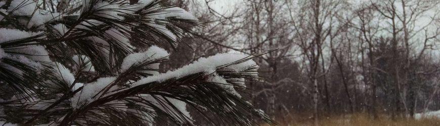 10 Favorite Winter Woodland Activities