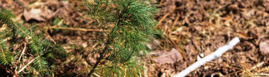 WWOA's New Forestry Leader Scholarship
