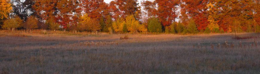 WWOA's New Forestry Leader Scholarship Update!