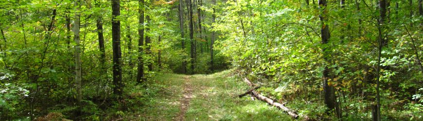 WWOA's Open Woods – All Are Welcome on May 18!